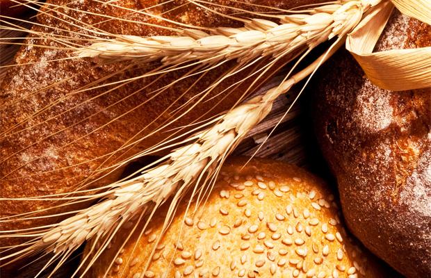 pszenica zmodyfikowana genetycznie